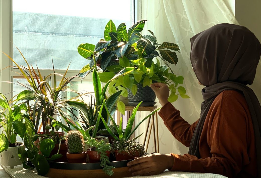 Meet my plants!